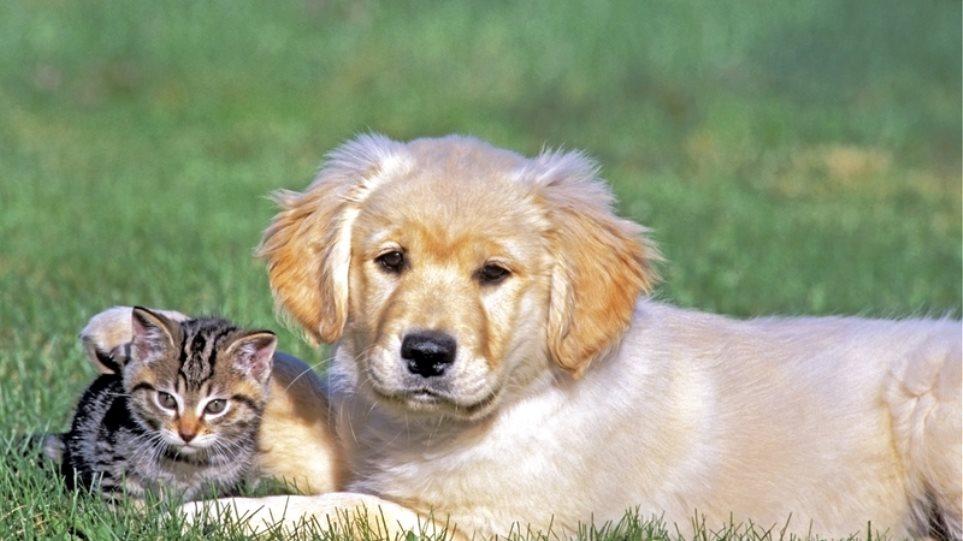 Το νομοσχέδιο για τα ζώα συντροφιάς είναι σε λάθος κατεύθυνση